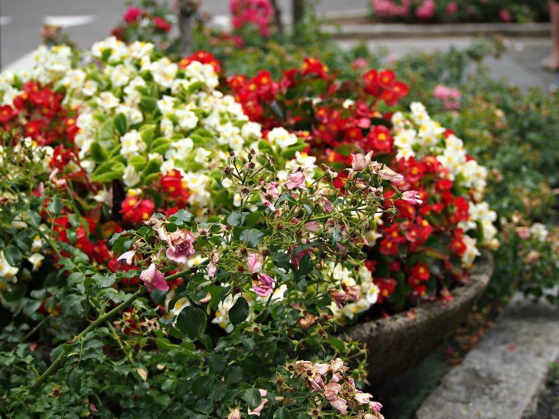 květiny itálie