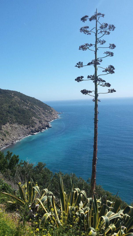 jih ostrova Elba