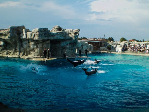 zábavní park itálie oltremare