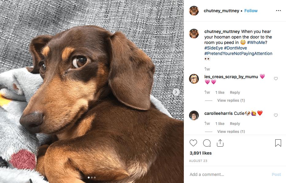 Instagram screenshot of @chutney_muttney