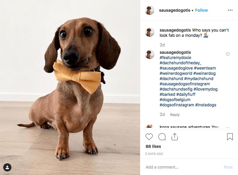 Instagram screenshot of dachshund @sausagedogotis