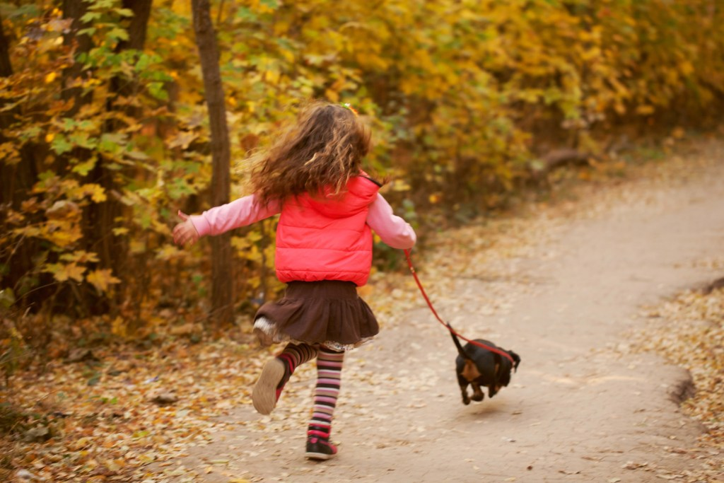 Are Dachshunds Friendly? Young child running with a dachshund when out on a walk