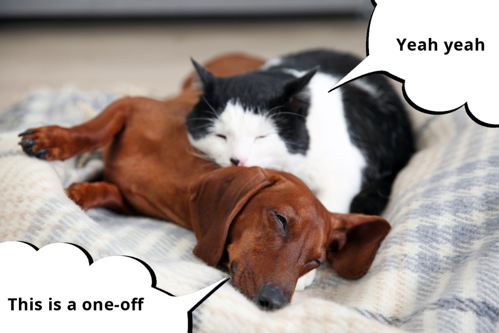 101 things dachshunds want you to know. Cat fast asleep on top of a dachshund