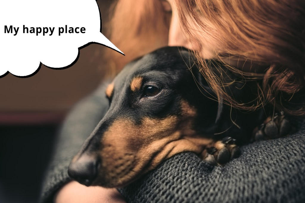 101 things dachshunds want you to know. Happy dachshund being held and cuddled by his owner