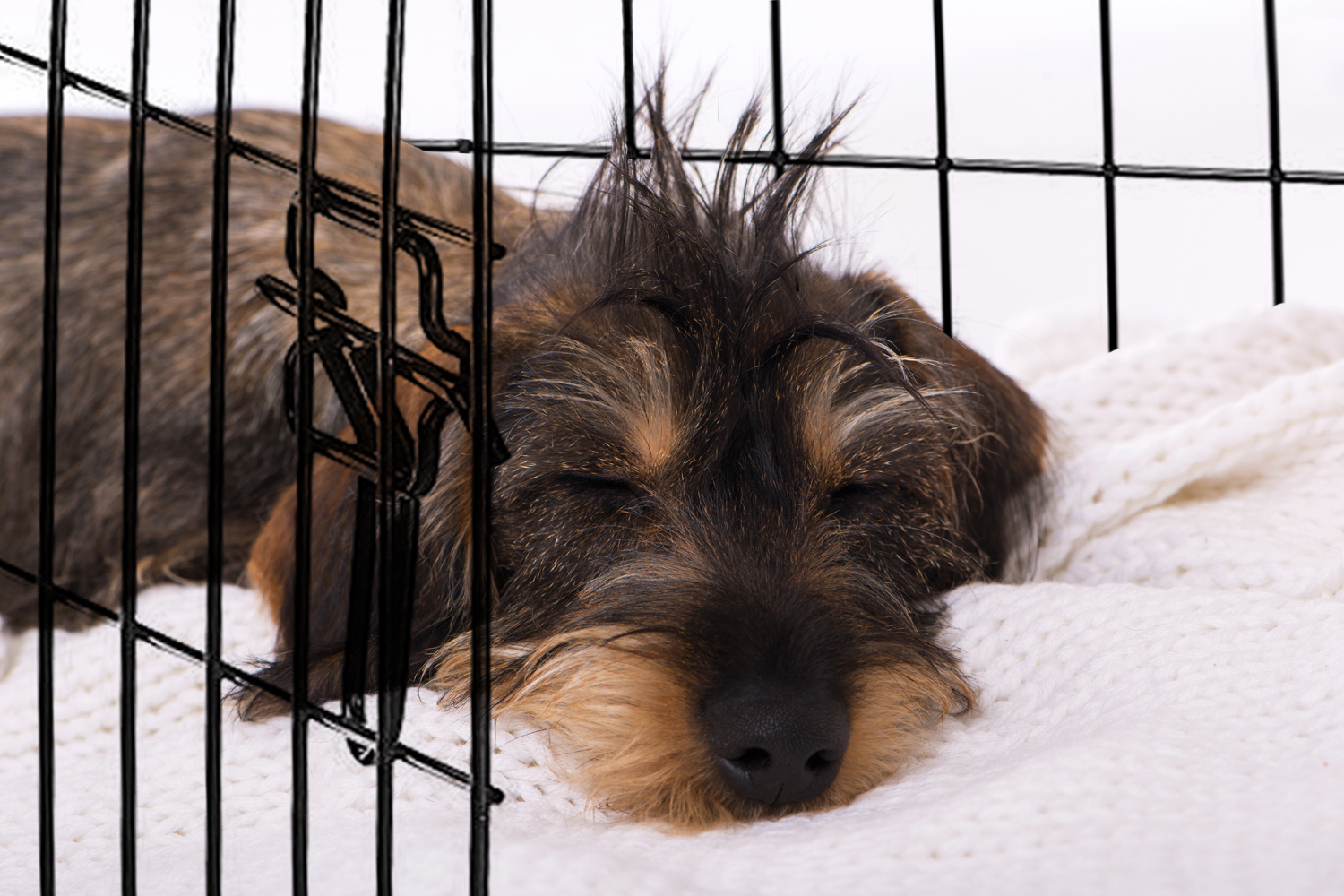 How Do You Crate Train a Dachshund Puppy I Love Dachshunds