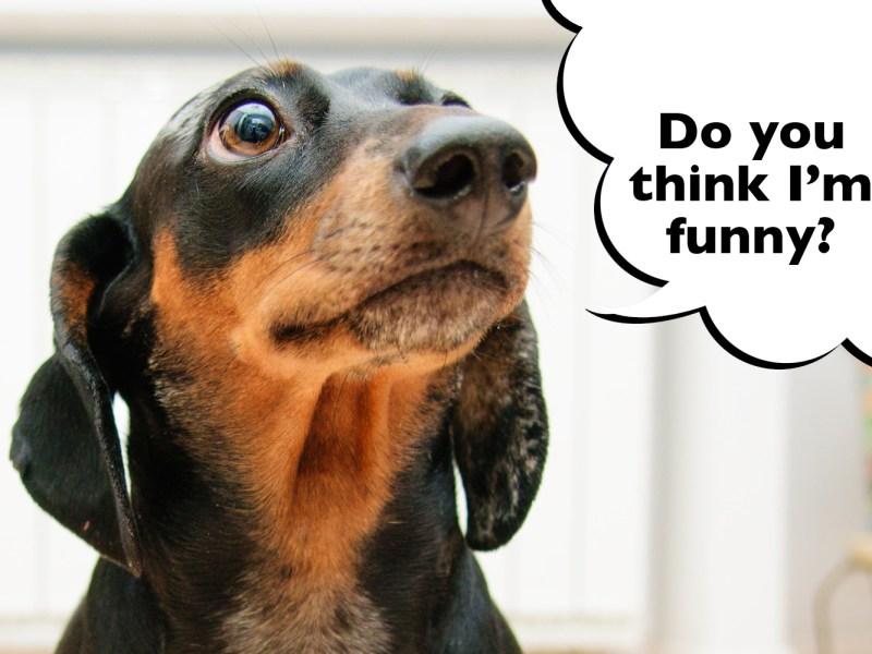 Dachshund funniest dog breed