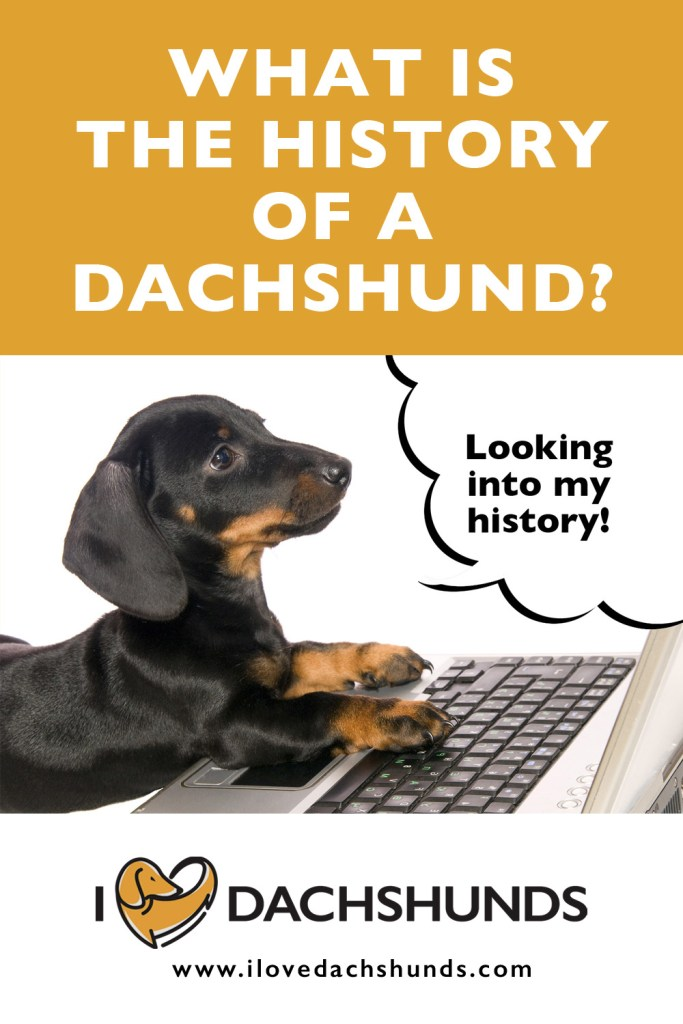 What is the history of a Dachshund