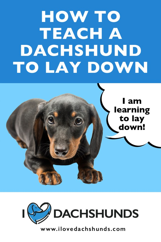 Dachshund laying down with wording that says How To Teach A Dachshund To Lay Down
