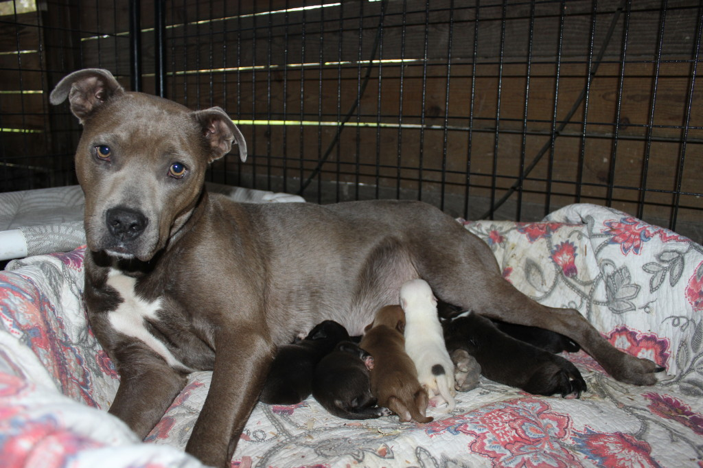 Puppies Mill Puppy Litter