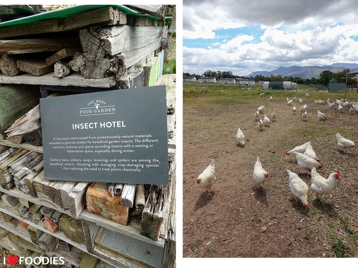 Insect hotel and free-range, pasture-raised layer hens