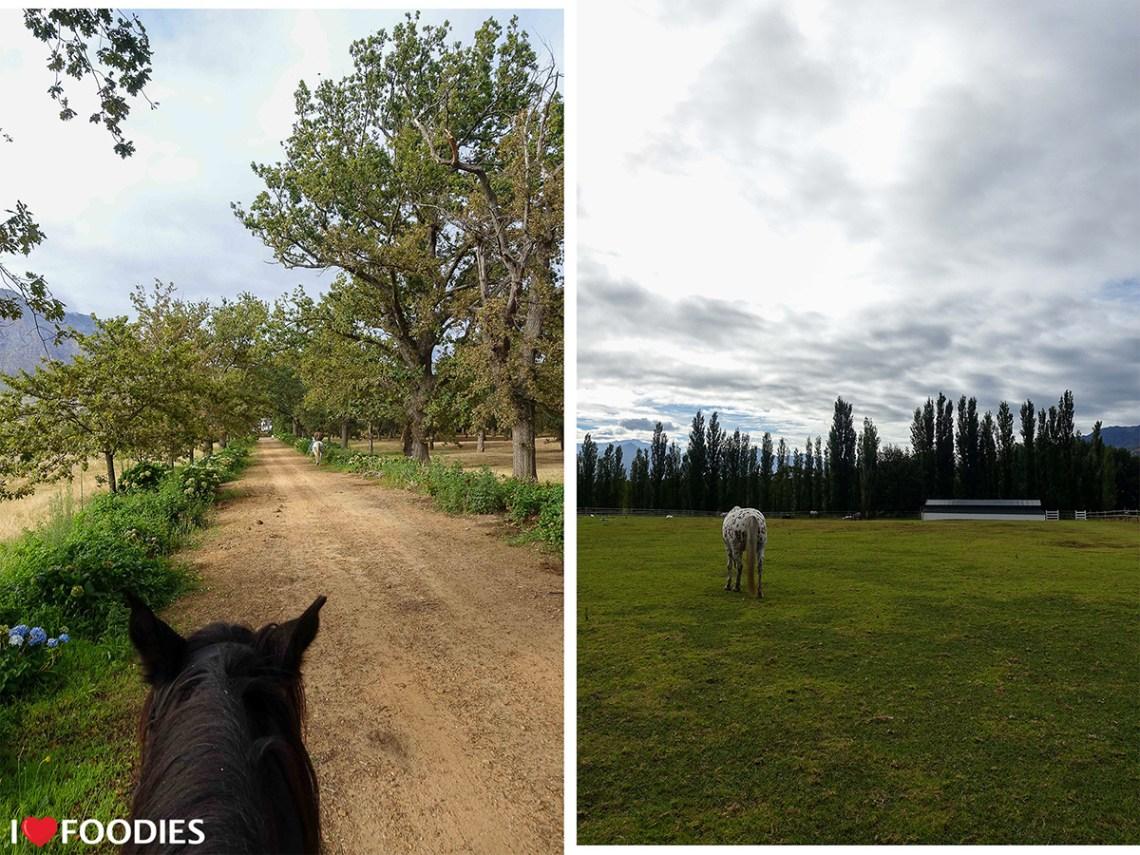 Boschendal horse-rising experience