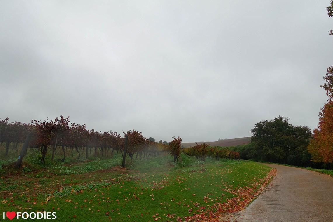 Ernie Els vineyard