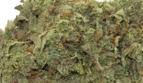 Gorilla Glue #1 Growing-Buy gorilla Glue weed online-medical marijuanas dispensary near me