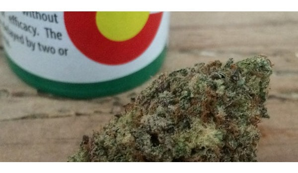 Blackberry Kush Strain Growing Online Cannabis Shop