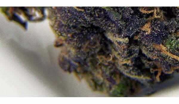 Blackberry Kush Strain Medical Online Cannabis Shop