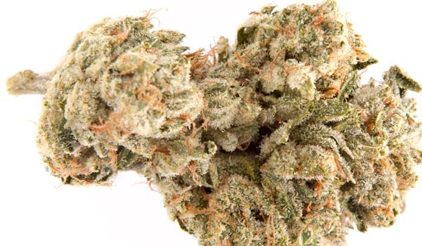 Martian Candy Strain EFfects