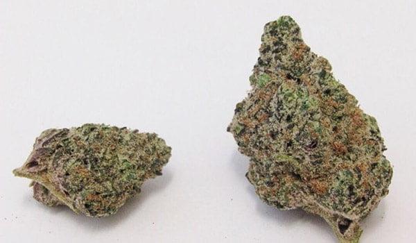 Wedding Cake Strain Growing-Buy wedding cake weed online-medical cannabis dispensary