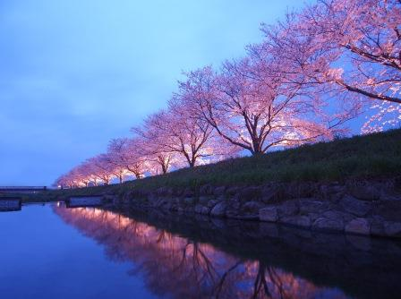 Fukuoka Cherry Blossoms A sight to behold. Feast your eyes on the breath-taking cherry blossoms—as they bloom during the annual sakura festivals celebrated first in southern Japan.