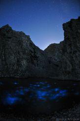 Bioluminescence - Glowing in the dark