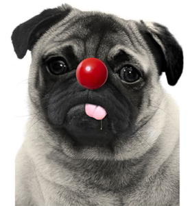 Red Nose Day Pug T Shirt Adult Unisex I Love Pugs