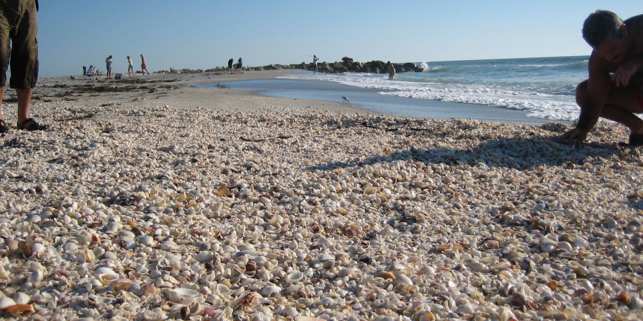New Shell Pile At Blind Pass