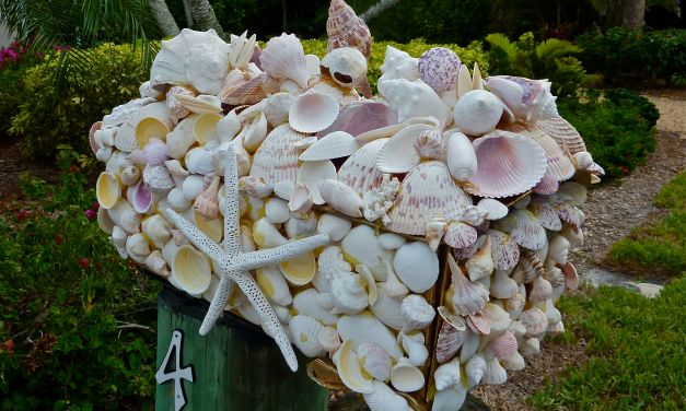 Jane's Seashell Frames and More