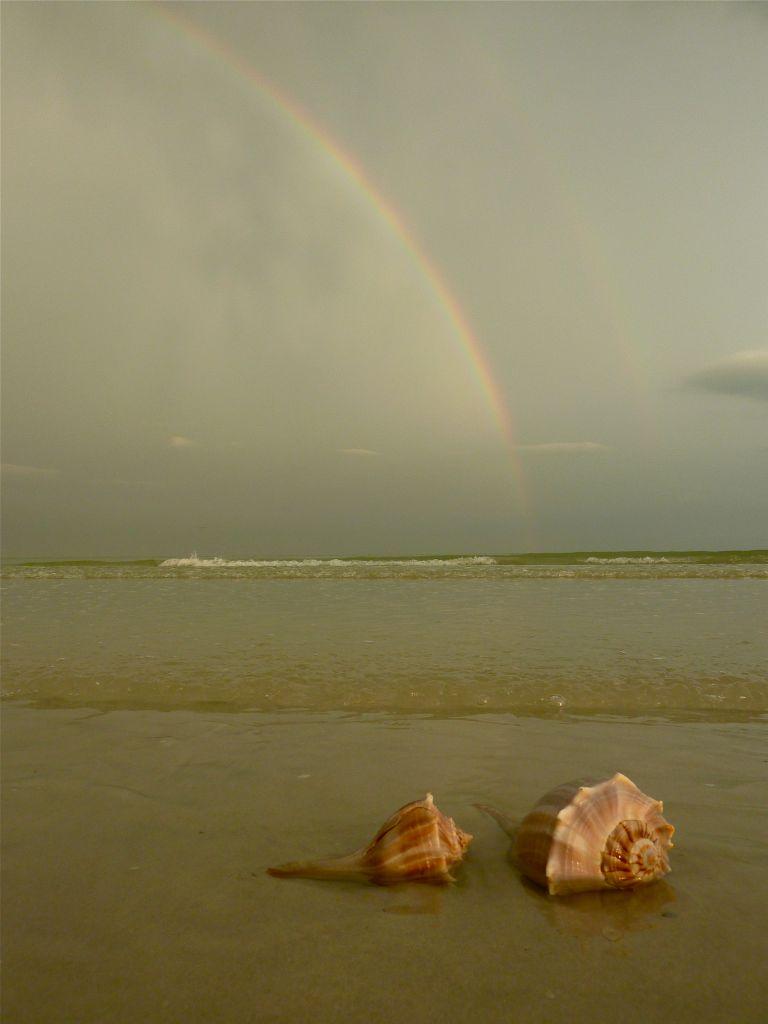 Seashells Under The Rainbow