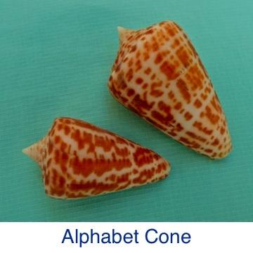 Cone - Alphabet ID