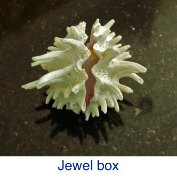 Jewel Box ID