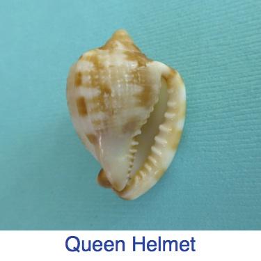 Queen Helmet ID