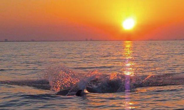 Splish Splash Sanibel Dolphins Having A Blast