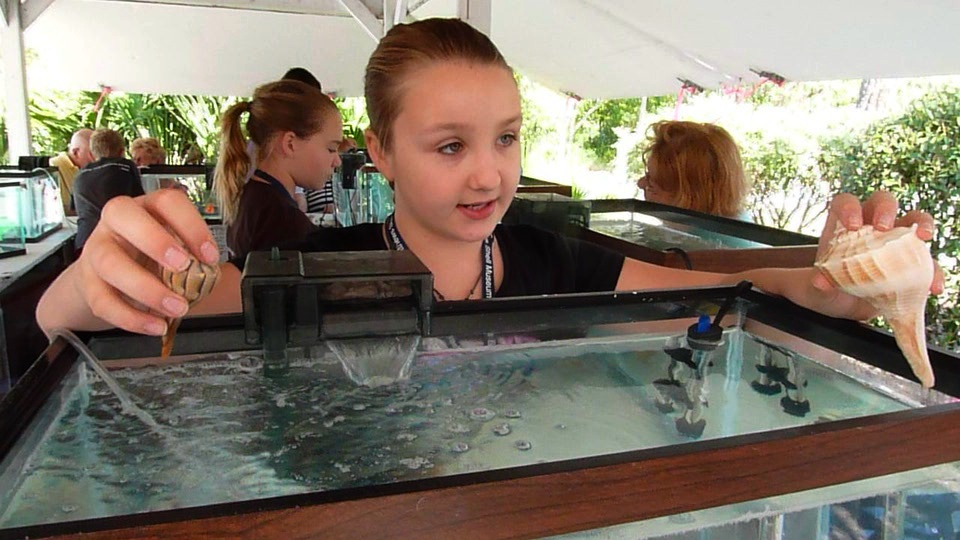 Sanibel Students Introduce Live Seashells