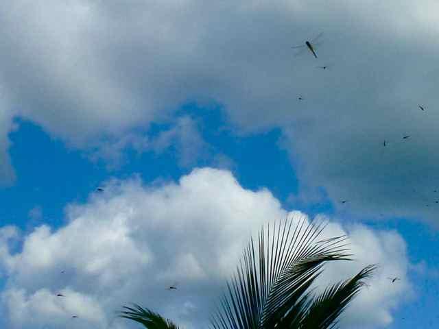 Dragonfly Sky