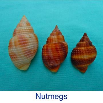 Nutmeg ID