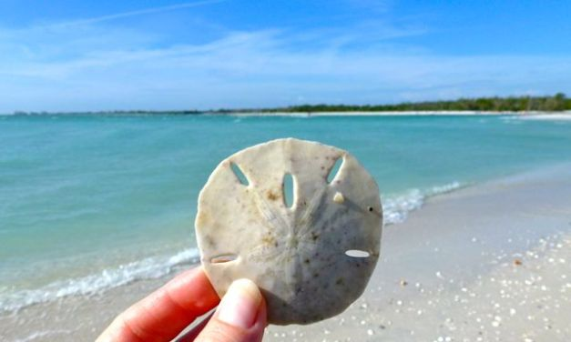 Shelling Day Trip From Sanibel To Bonita Beach