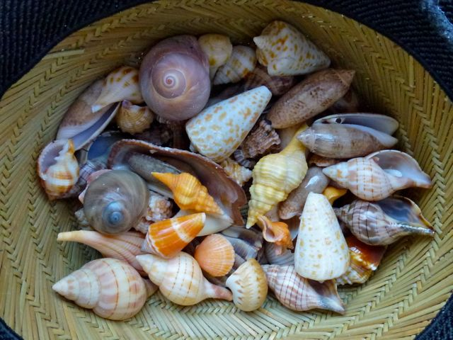 Collecting Colorful Seashells In The Gulf