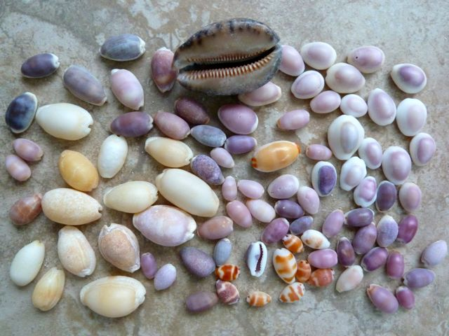 Our Adventures Of Collecting Seashells In Thailand – Part 2