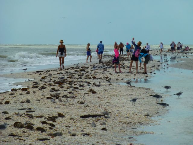Hurricane Sandy Sprinkles Seashells On Sanibel