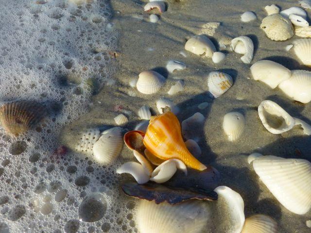 Sanibel Beaches After Hurricane Sandy