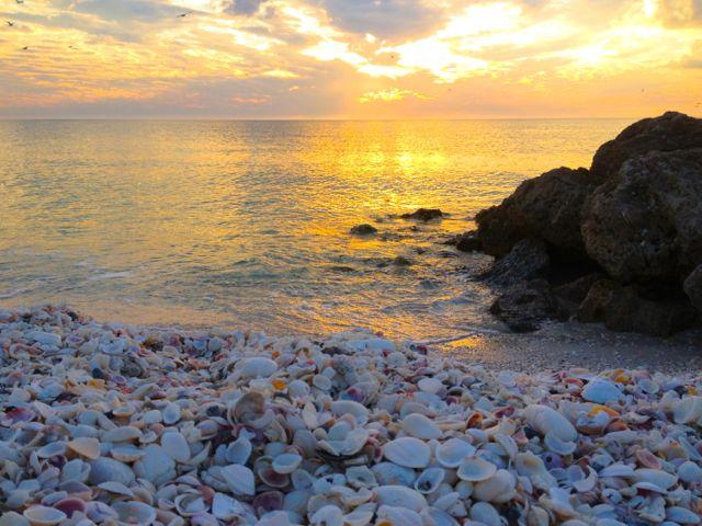 seashells sunset bonita springs