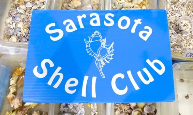 2013 50th Annual Sarasota Shell Show