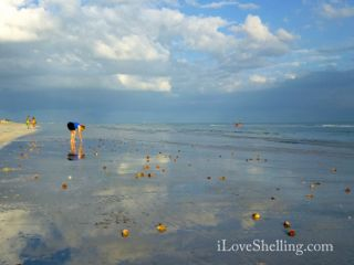 Sanibel Shelling Tarpon Bay Beach
