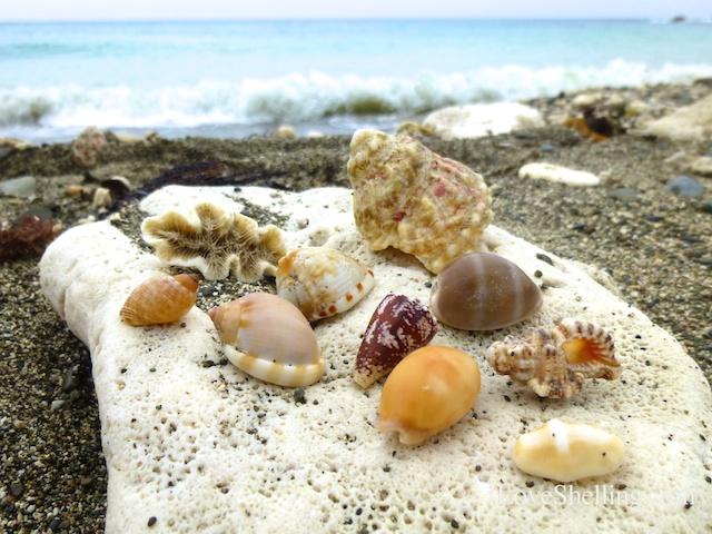 caribbean seashells gtmo cuba