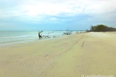 Shelltastic Southwest Florida Vacation GiveAway!
