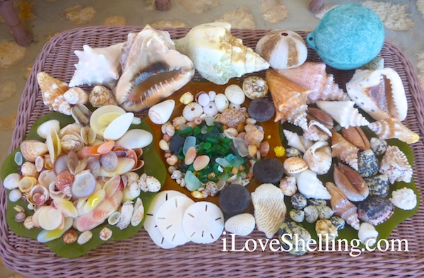 caribbean beach sea glass shells buoy sand dollars