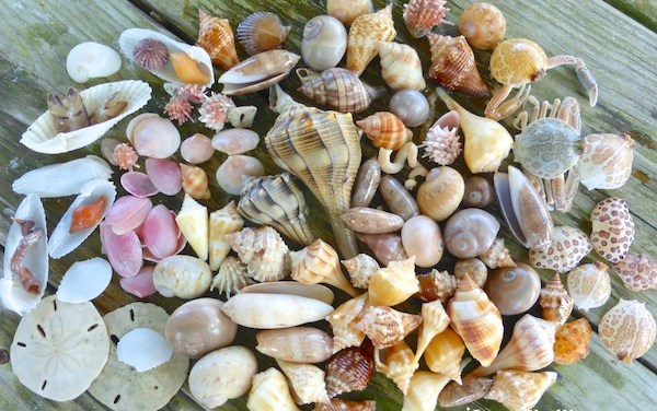 Treasures of Beachcombing on Fort Myers Beach
