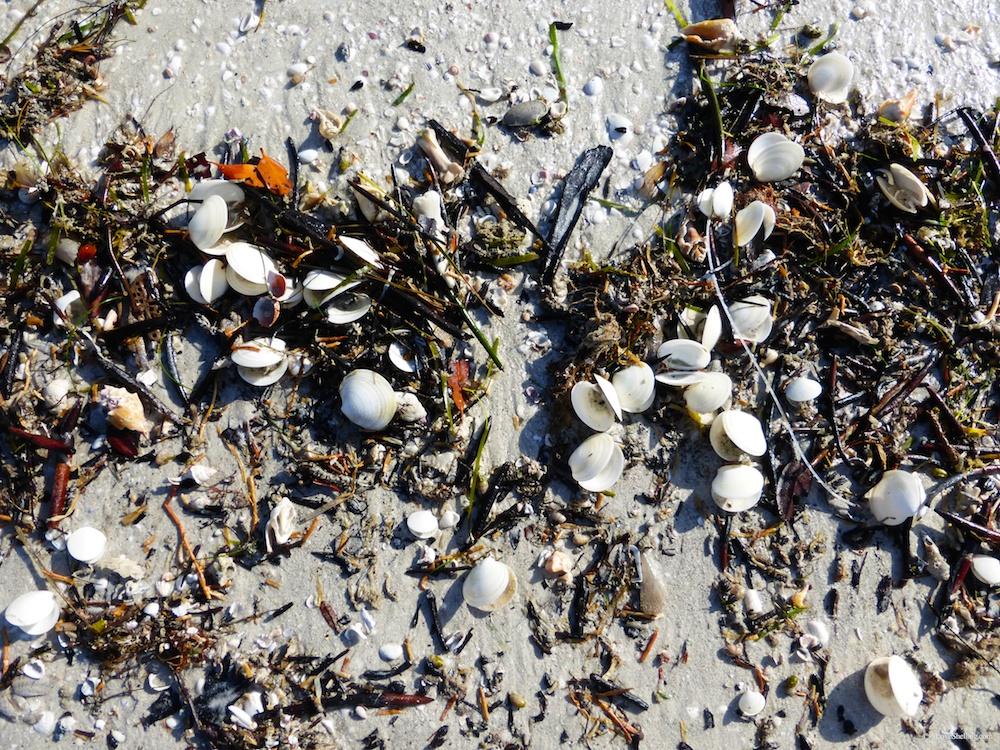 Seashells And Beach Bling Arrive Shell Festival Week