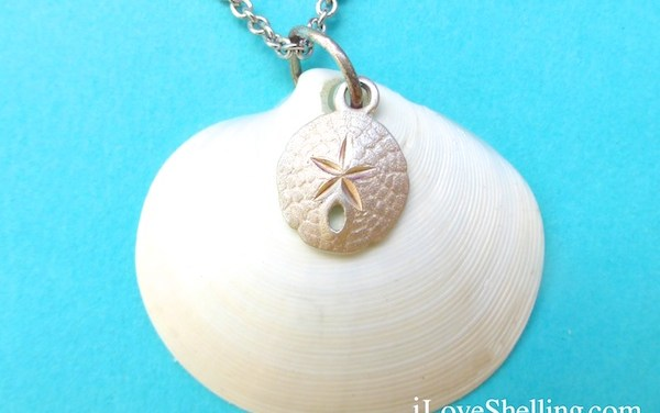 Sealife Jewelry With Every iLoveShelling Shelling Adventure Cruise