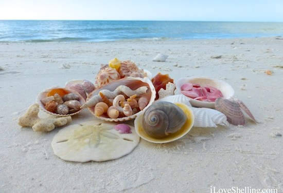 New Shelling Cruise to the Islands South of Sanibel
