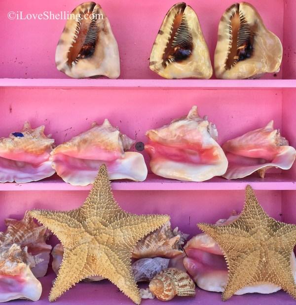 Bahamas pink sea shells and starfish